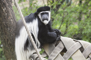 party-for-the-planet-zoo